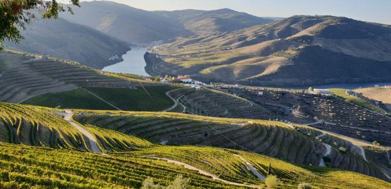 Vandring portugal- vineyard